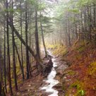 Charlie's Bunion Hike | Trail Reviews Great Smoky Mountains