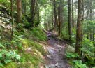 The 5 Most Difficult Hiking Trails In The Smoky Mountains
