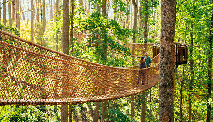 New Canopy Tour in Gatlinburg