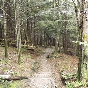 High Elevation Forest on Andrews Bald