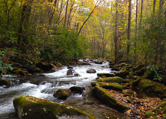 Fall Stream in the Great Smoky Mountains