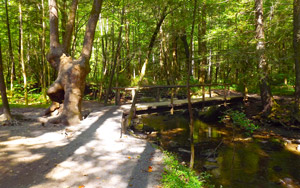 Trail Bridge on Fighting Creek Nature Trail