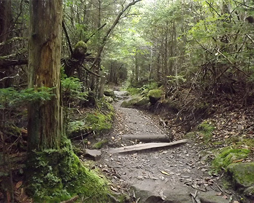 Hiking Trails in the Smokies