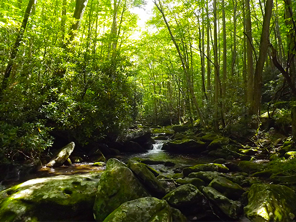 Middle Prong Trail Smoky Mountains