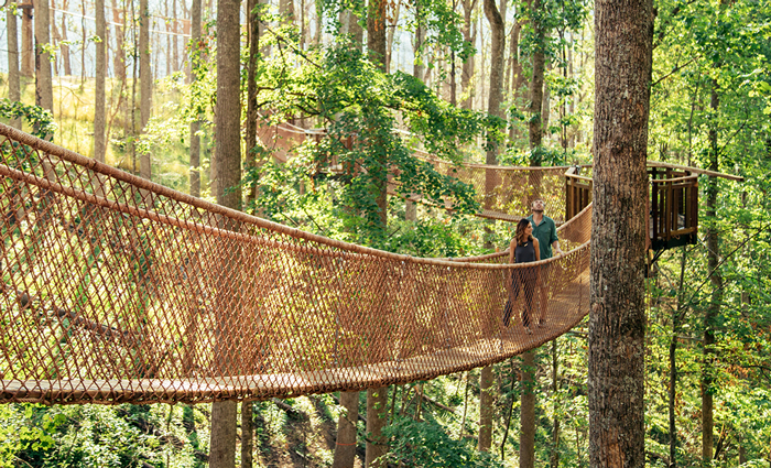 Canopy Tree Walk at Anakeesta