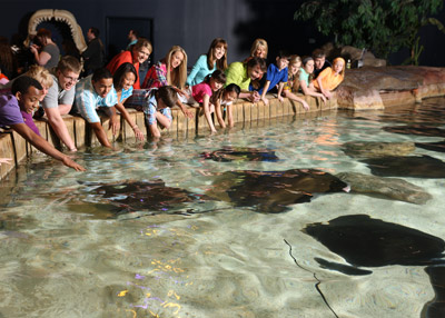 Sting Rays at Ripley's Aquarium