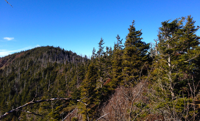 View Of Mt. LeConte Summit