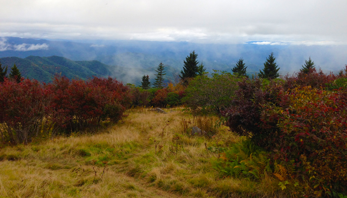 Andrews Bald in the Great Smoky Mountains