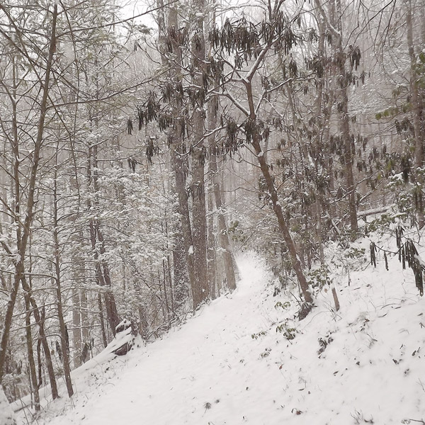 Snowy Hikes in the Smoky Mountains