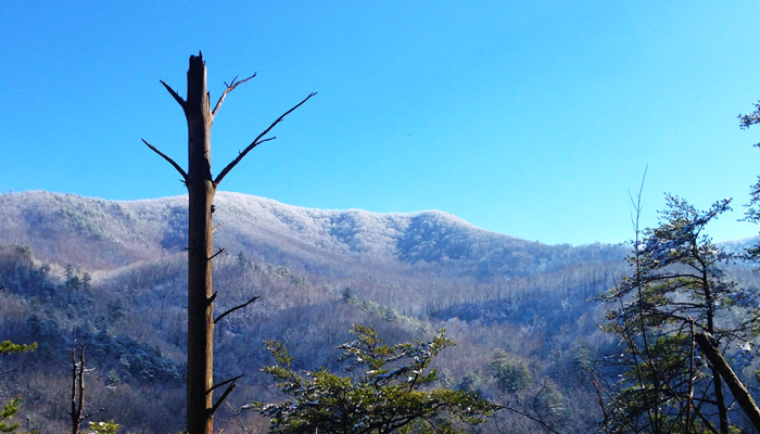 January in the Smoky Mountains